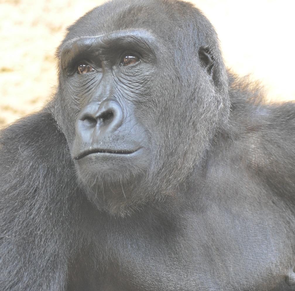 im Rostocker Zoo VII