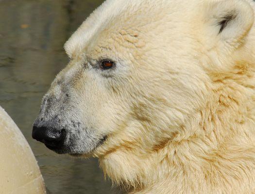 im Rostocker Zoo XV