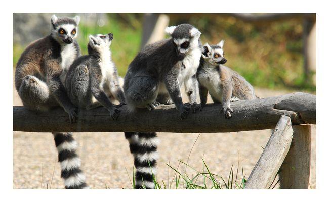 im Rostocker Zoo XVIII