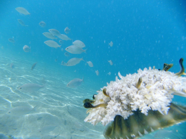 im Rotem Meer