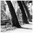 ...im Saarlouiser Stadtgarten