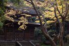 Im SANKEIEN GARDEN, Yokohama