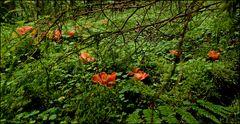 Im satten Waldesgrün kann man sie gut sehen...