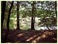 Im Schatten der Bäume von margitta decker