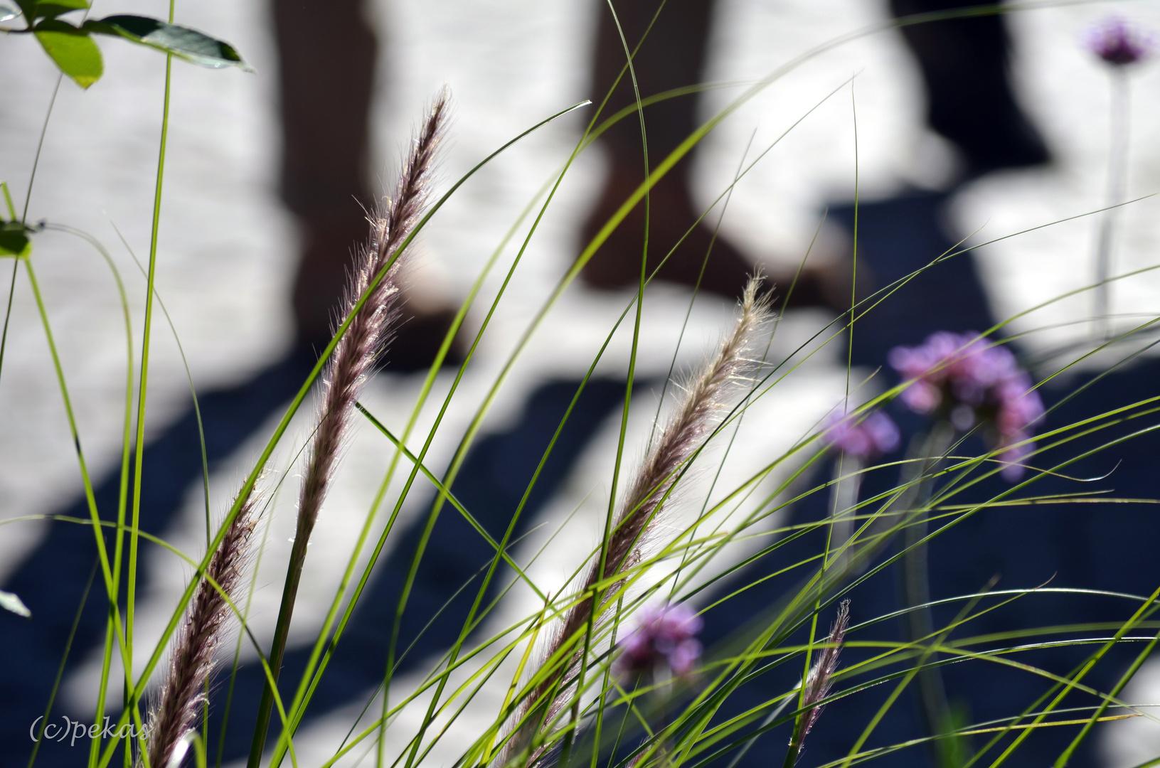 Im Schatten der Gräser