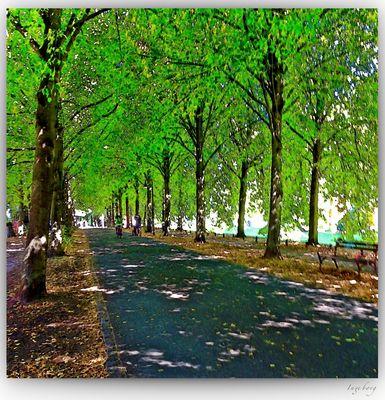 im Schatten der Linden
