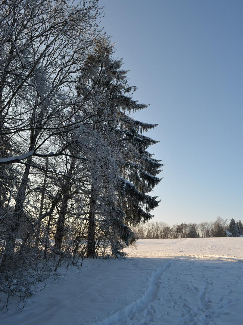 Im Schatten des Waldes