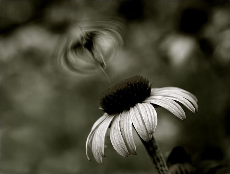Im Schattenreich der Schmetterlinge