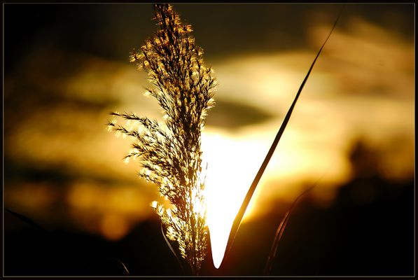 Im Schein der November - Abendsonne (2)