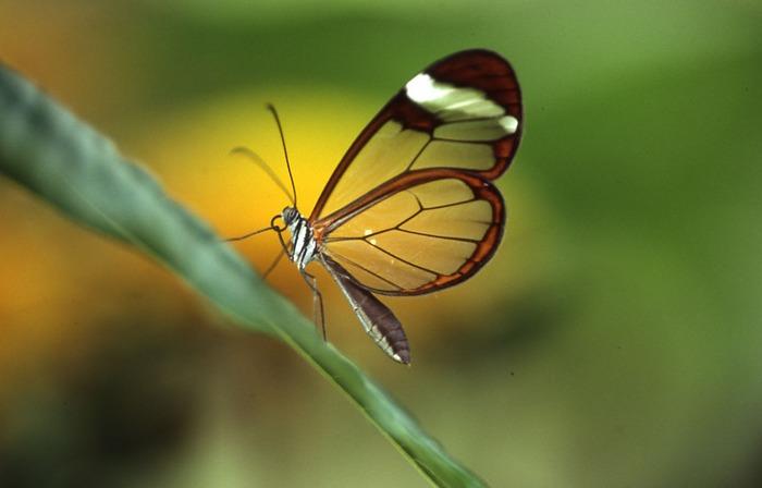 Im Schmetterlingsgarten