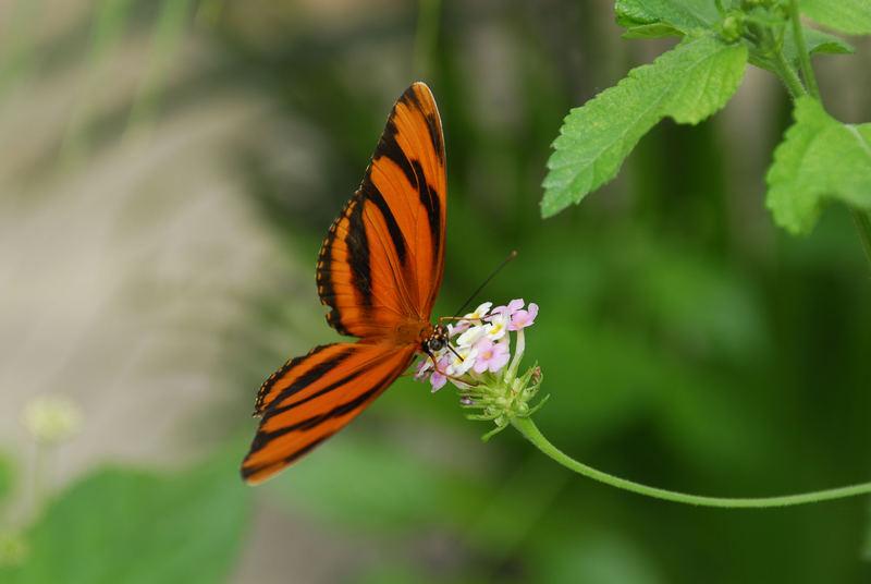 Im Schmetterlingsgarten - Schloß Sayn
