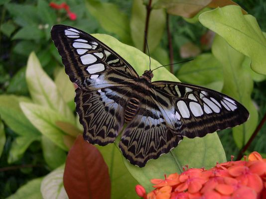 im Schmetterlingshaus ...