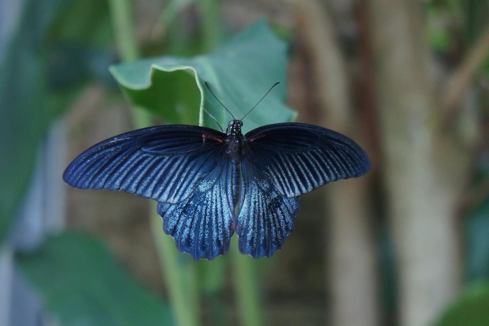 Im Schmetterlingshaus #5