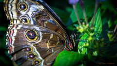 Im Schmetterlingshaus 7
