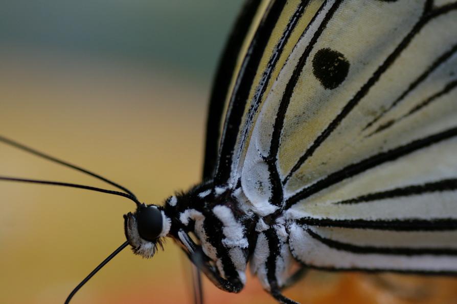 Im Schmetterlingshaus auf der Insel Mainau