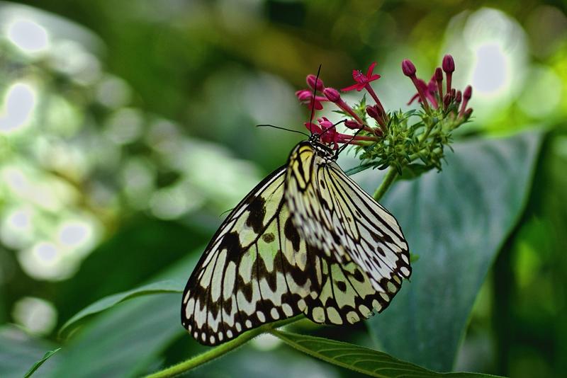 im Schmetterlingshaus