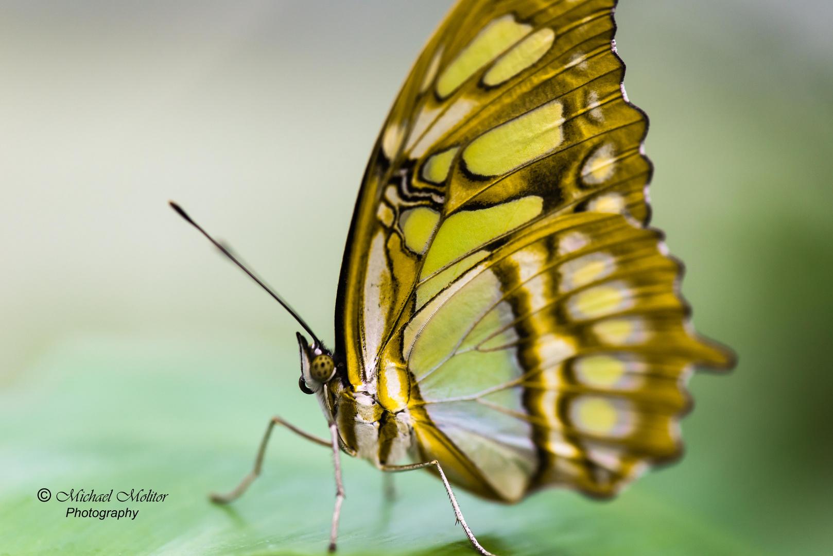 Im Schmetterlingshaus - Maxipark Hamm
