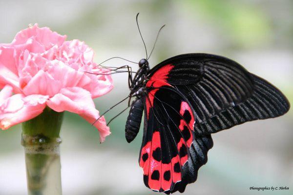 Im Schmetterlingspark in Sassnitz