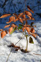 ...im Schnee