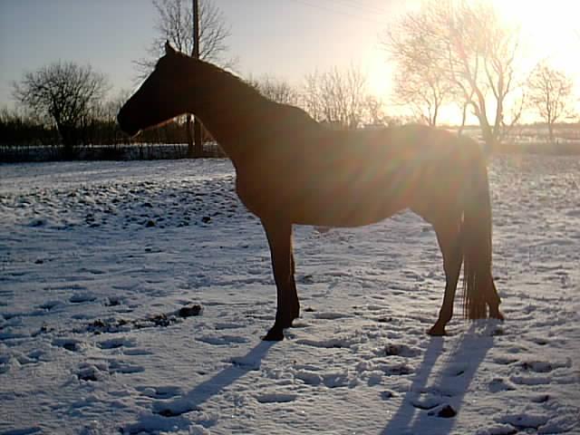 Im Schnee der Abendsonne