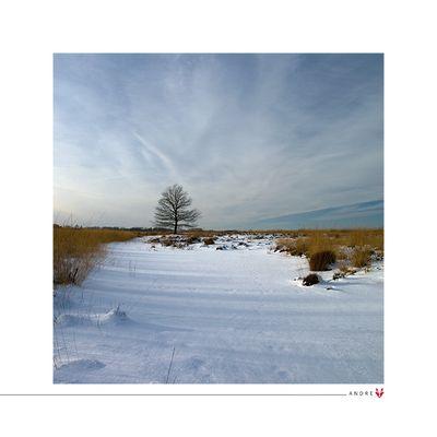 - im Schnee -