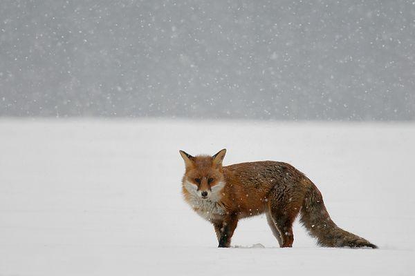Im Schnee III