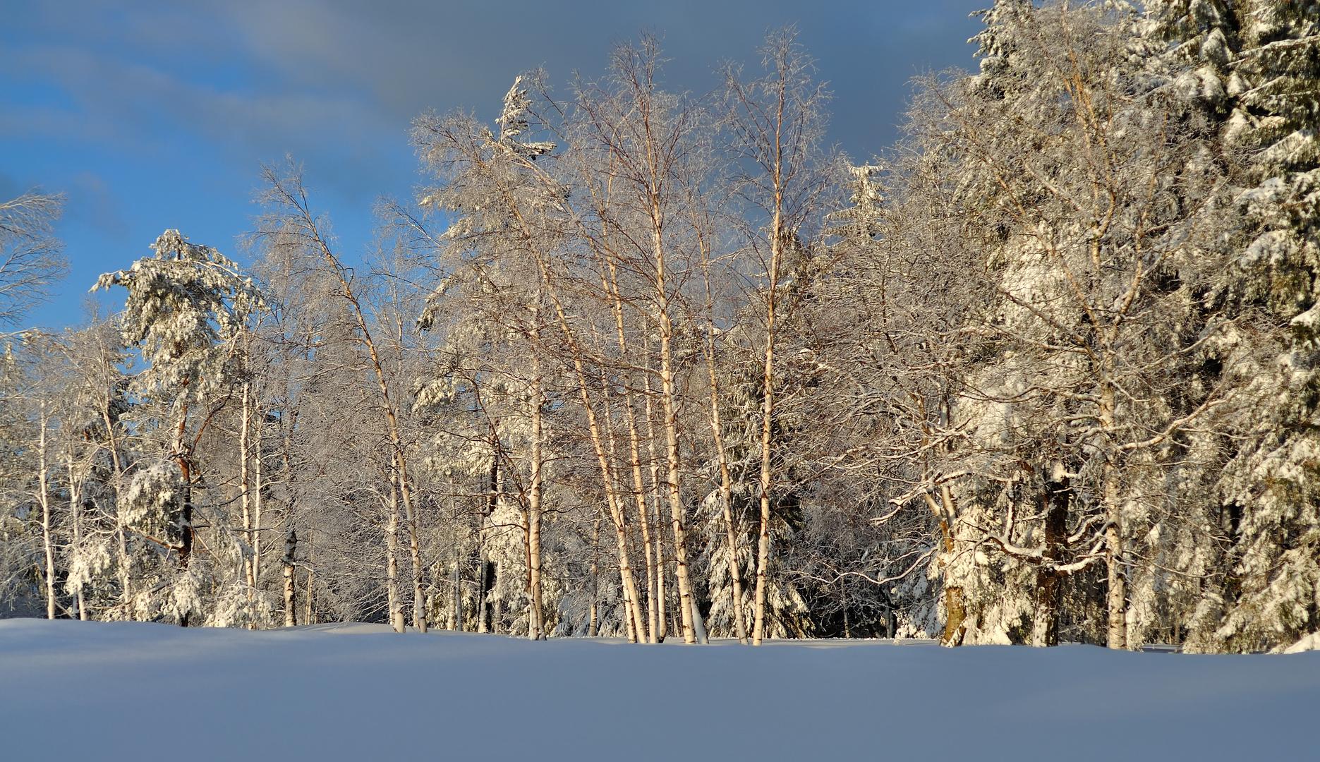 im Schnee..II