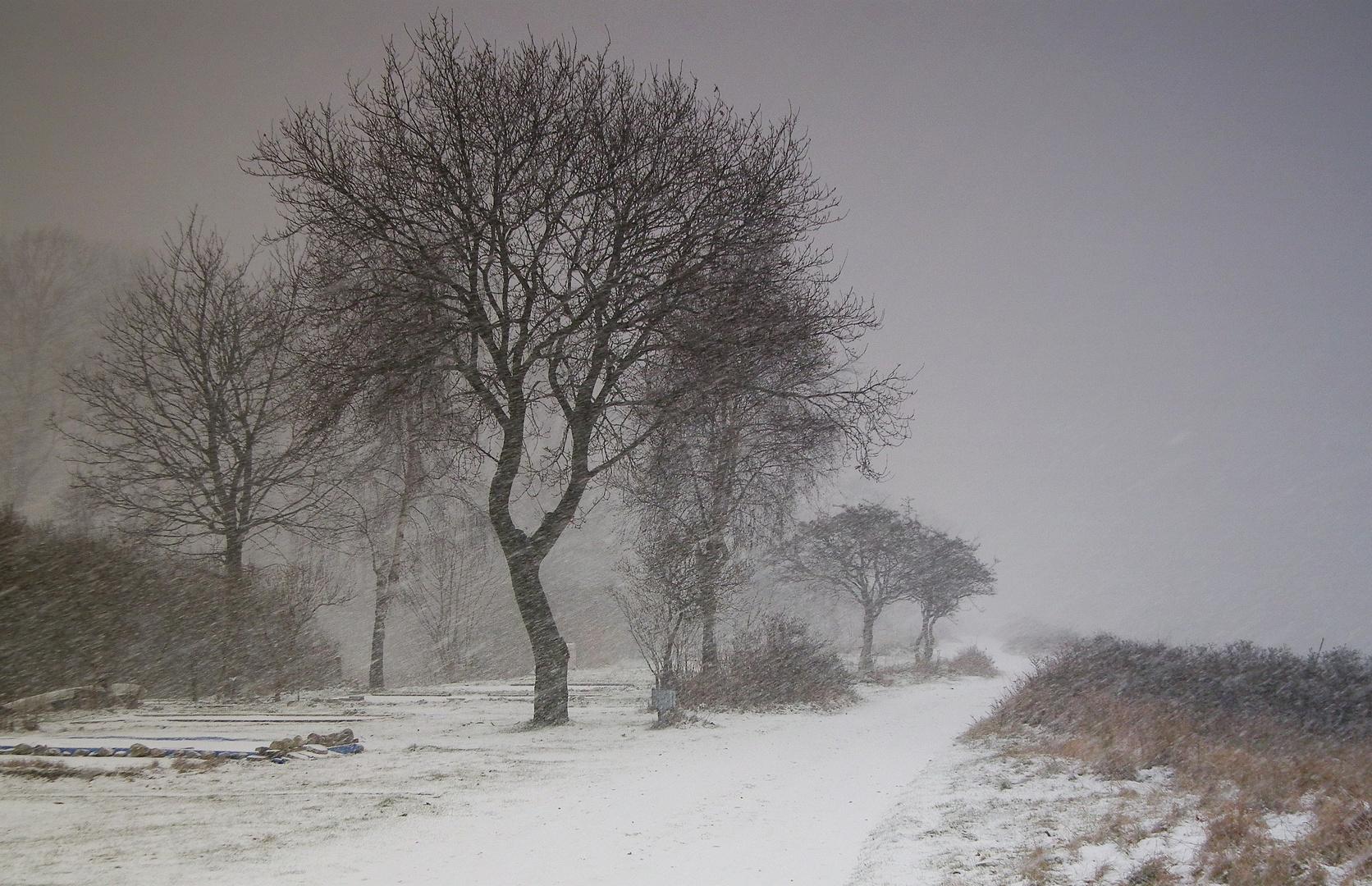 im Schneetreiben...