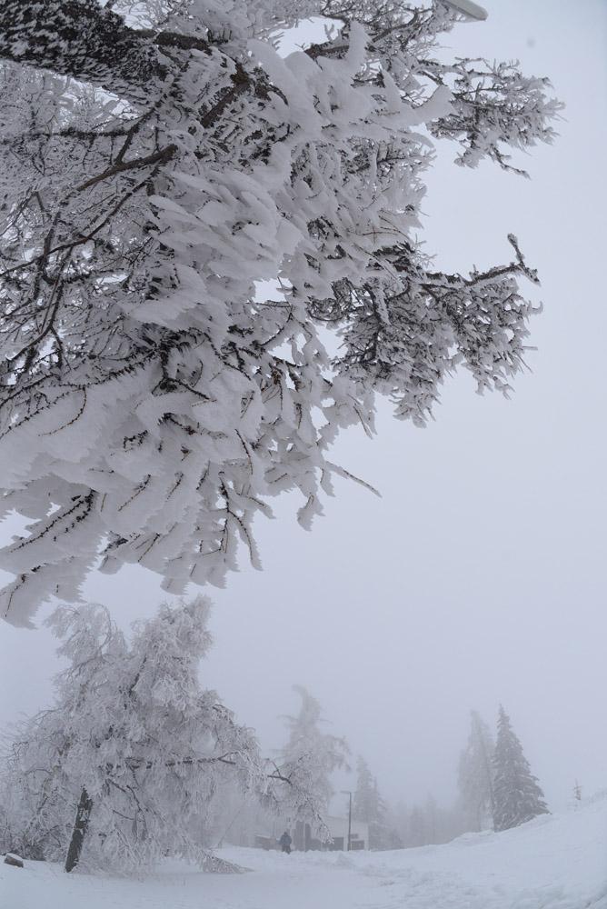 im schönen Schnee