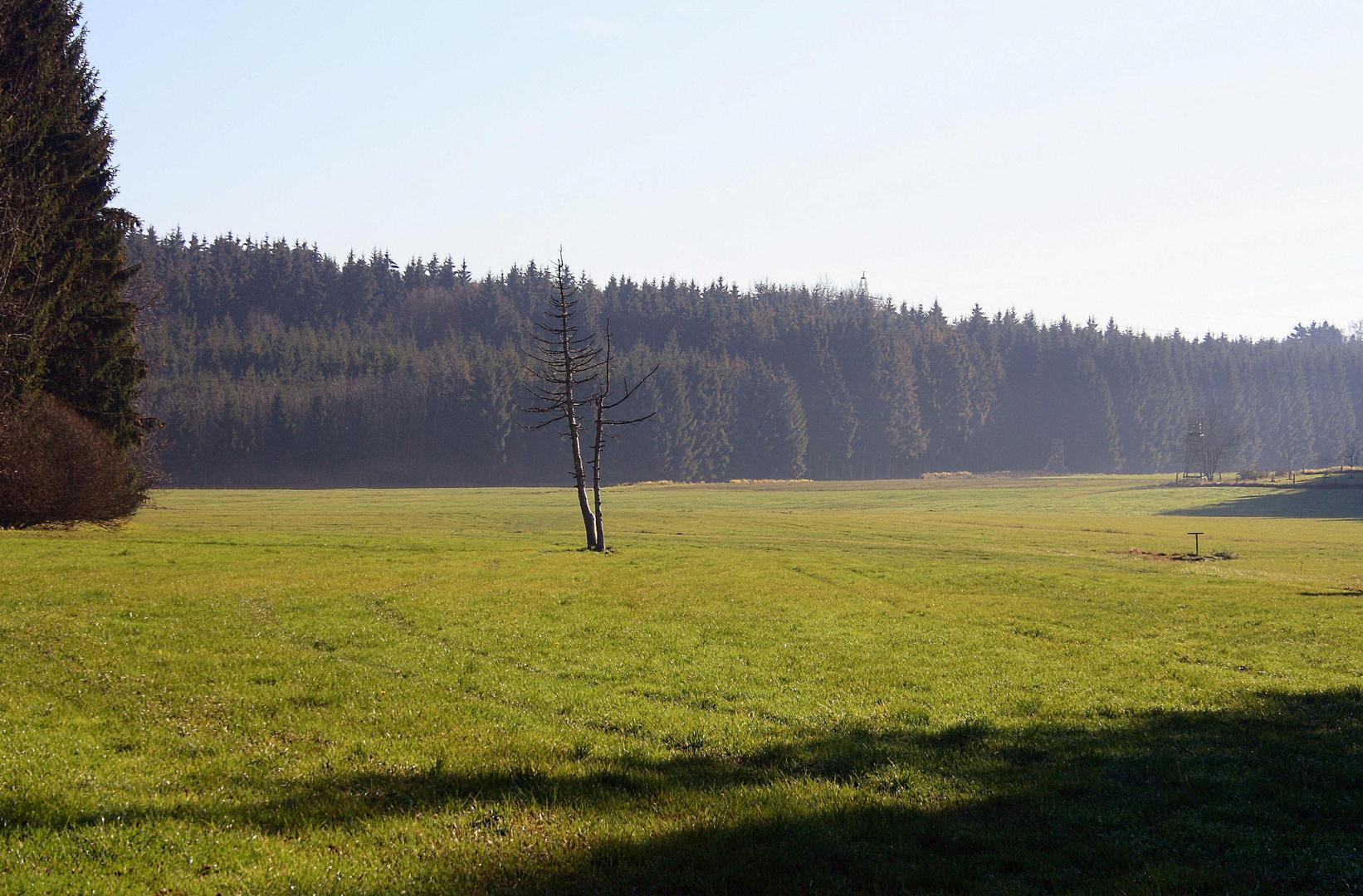 im schönsten Wiesengrunde