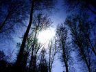 im Schutz der Bäume