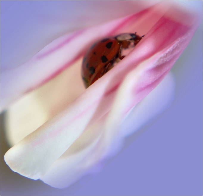 Im Schutz der Blüte*