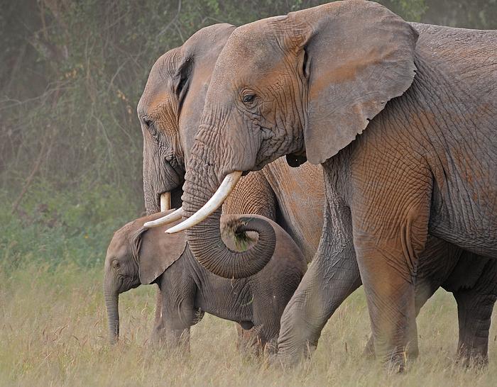 Im Schutz der Familie