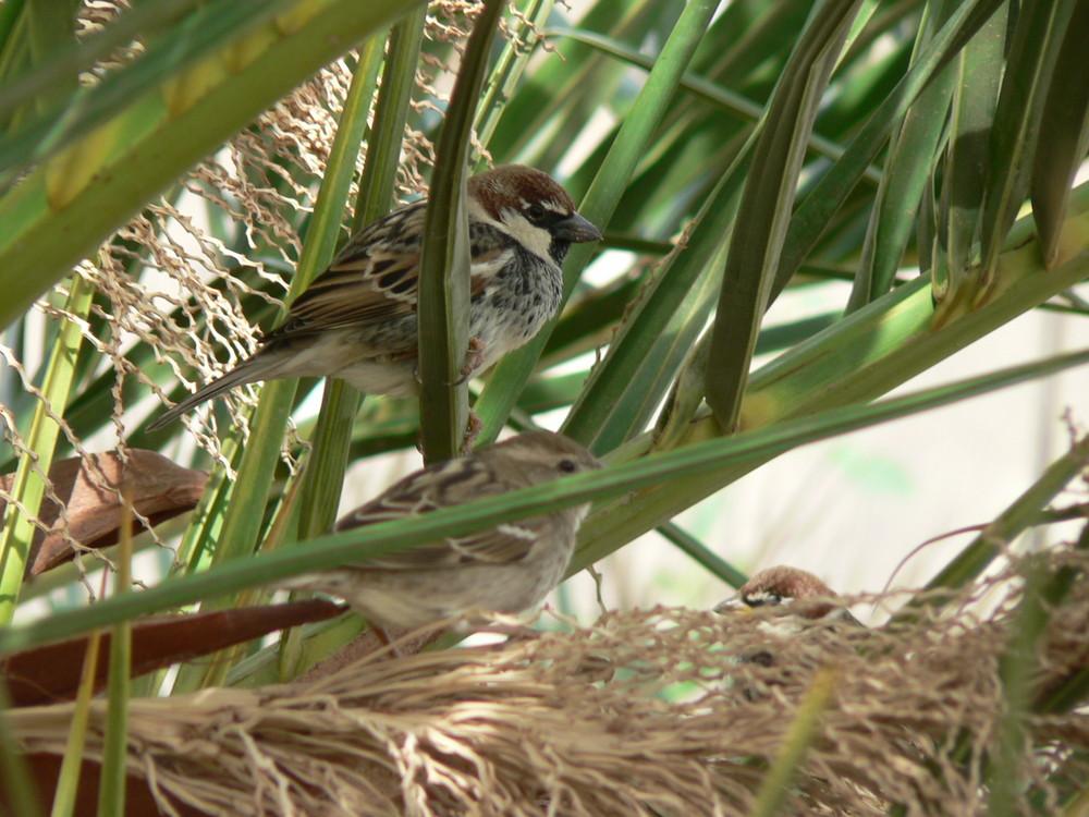Im Schutz der Palme