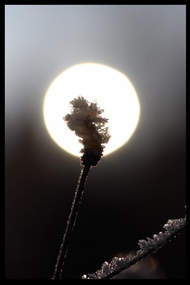im Sonnenlicht II