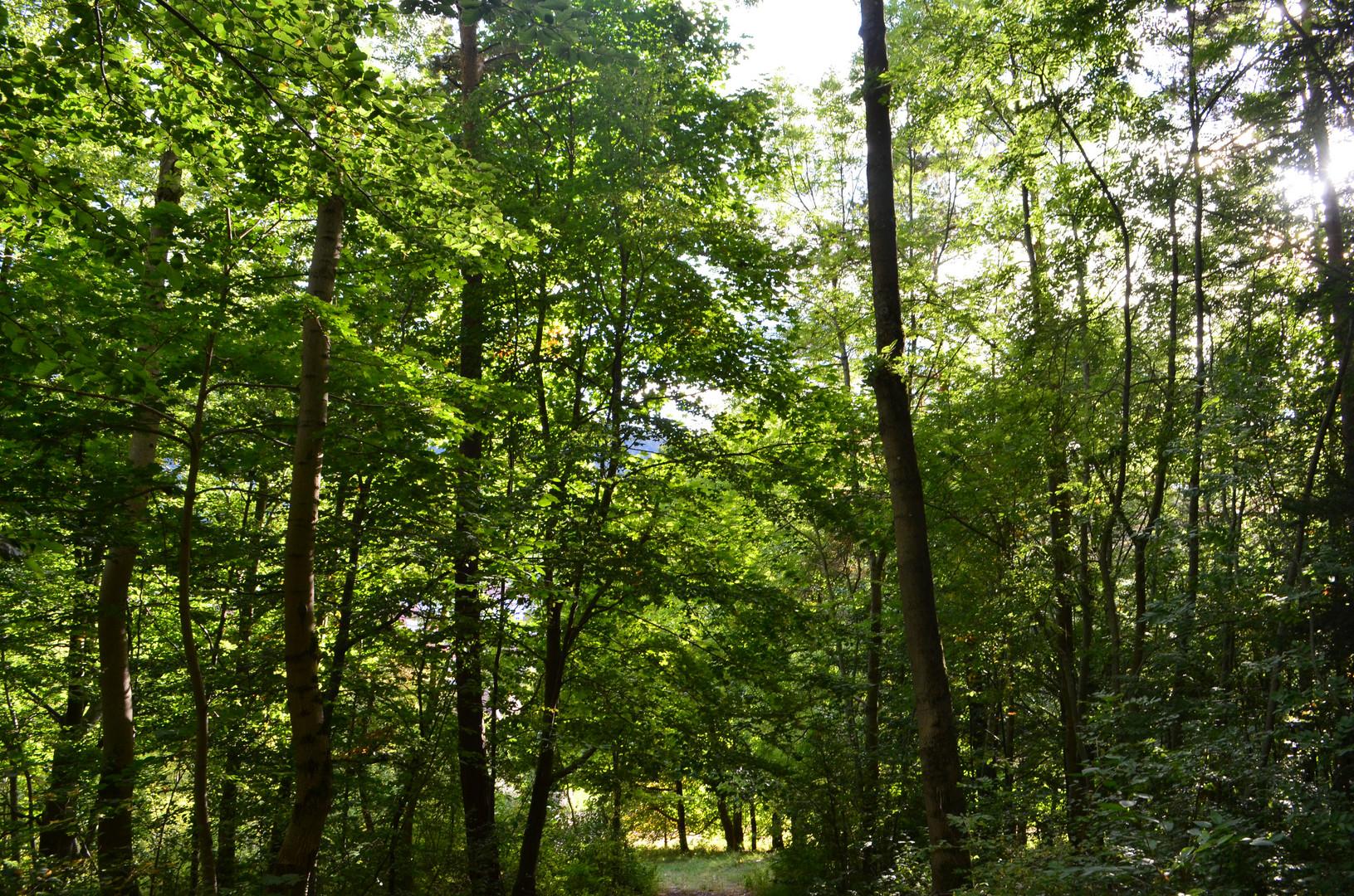 Im spätsommerlichen Wald