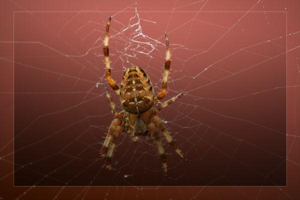 Im spinnen garten