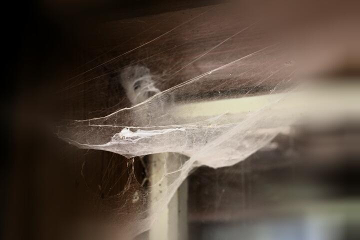 im spinnennetz gefangen
