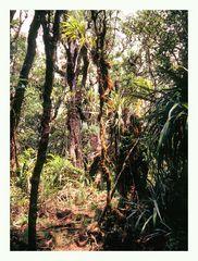 Im subtropischen Regenwald