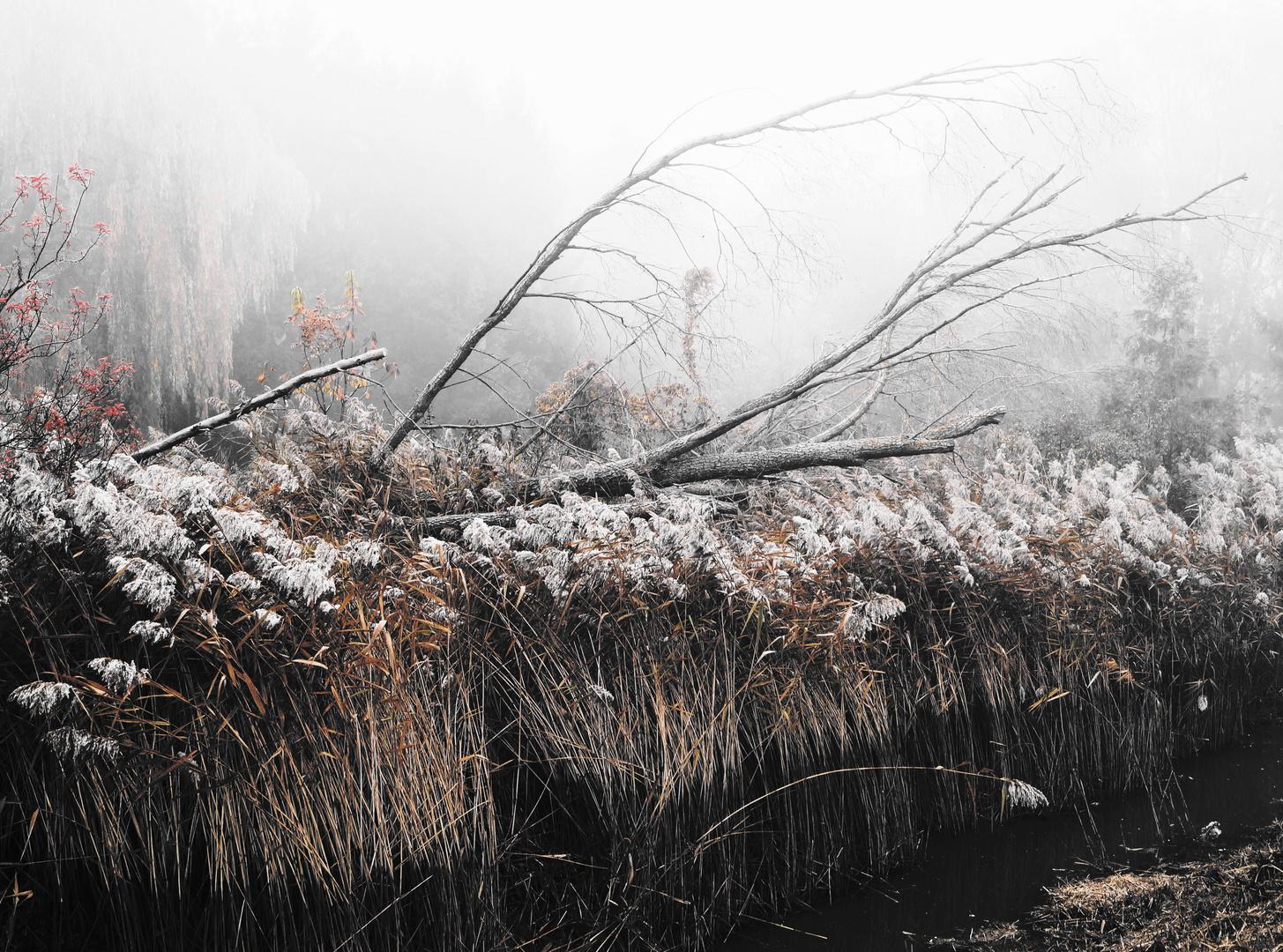 Im Sumpf