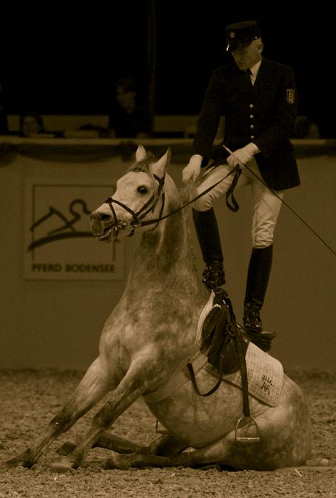 Im Takt der Pferde #5