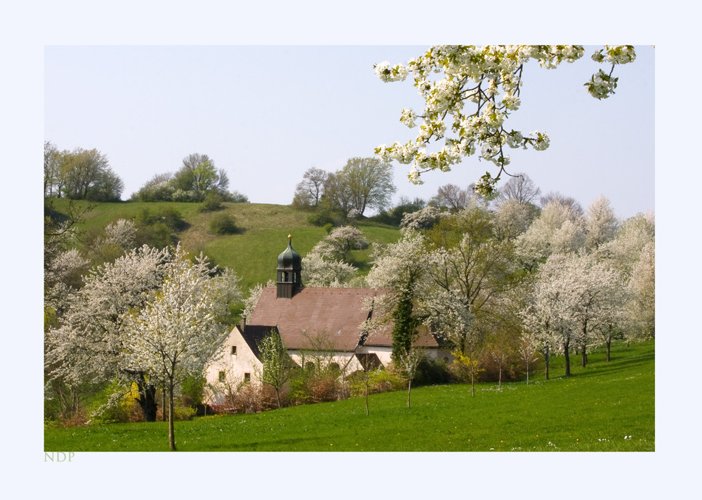 Im Tal der Kirschblüte