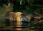 Im Tal der Tiger