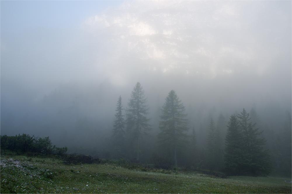 Im Tal des Nebels