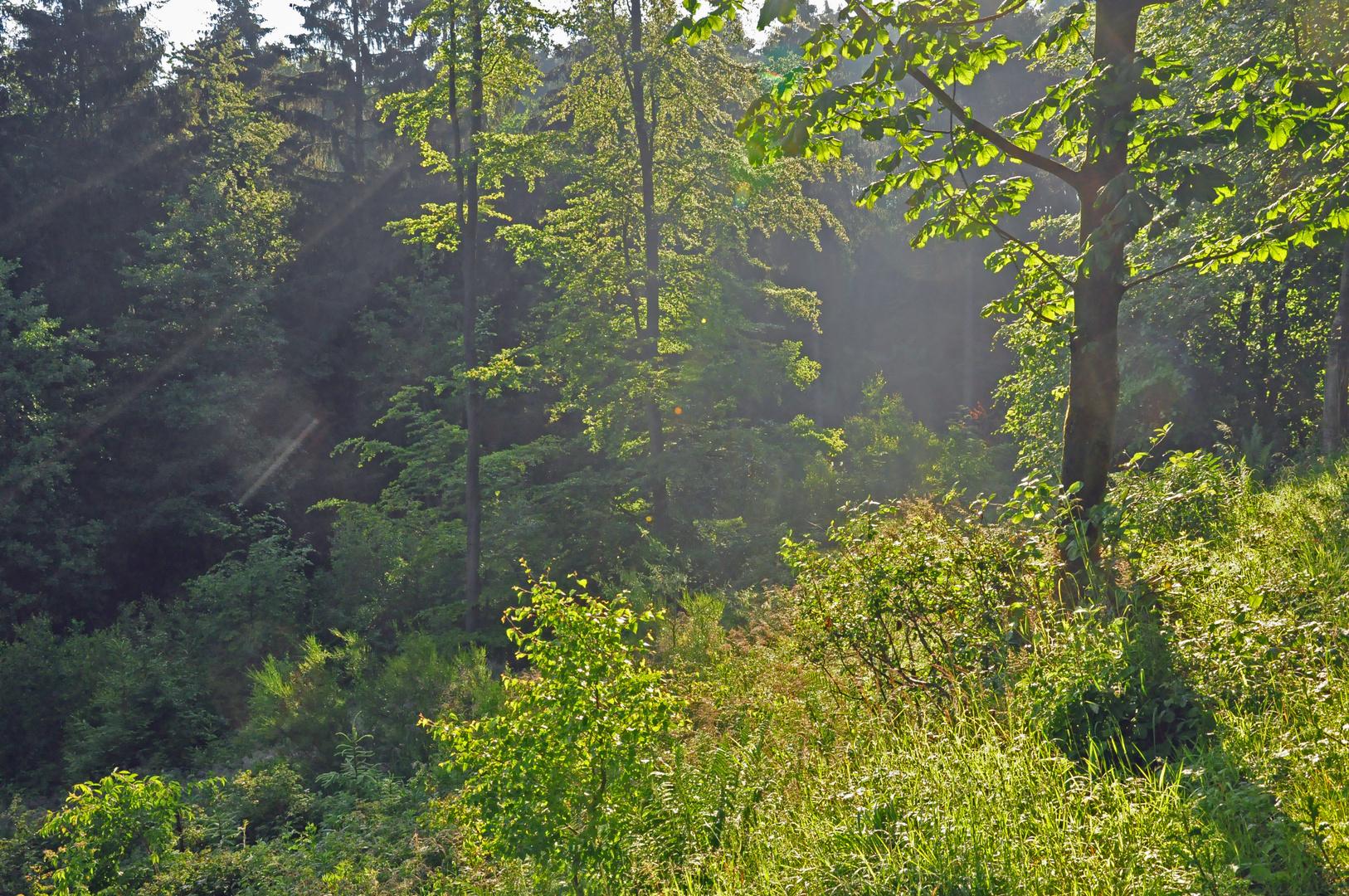 Im Tal des weißen Wehebachs