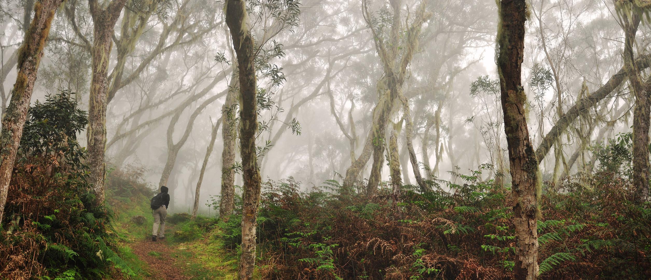 Im Tamarindenwald