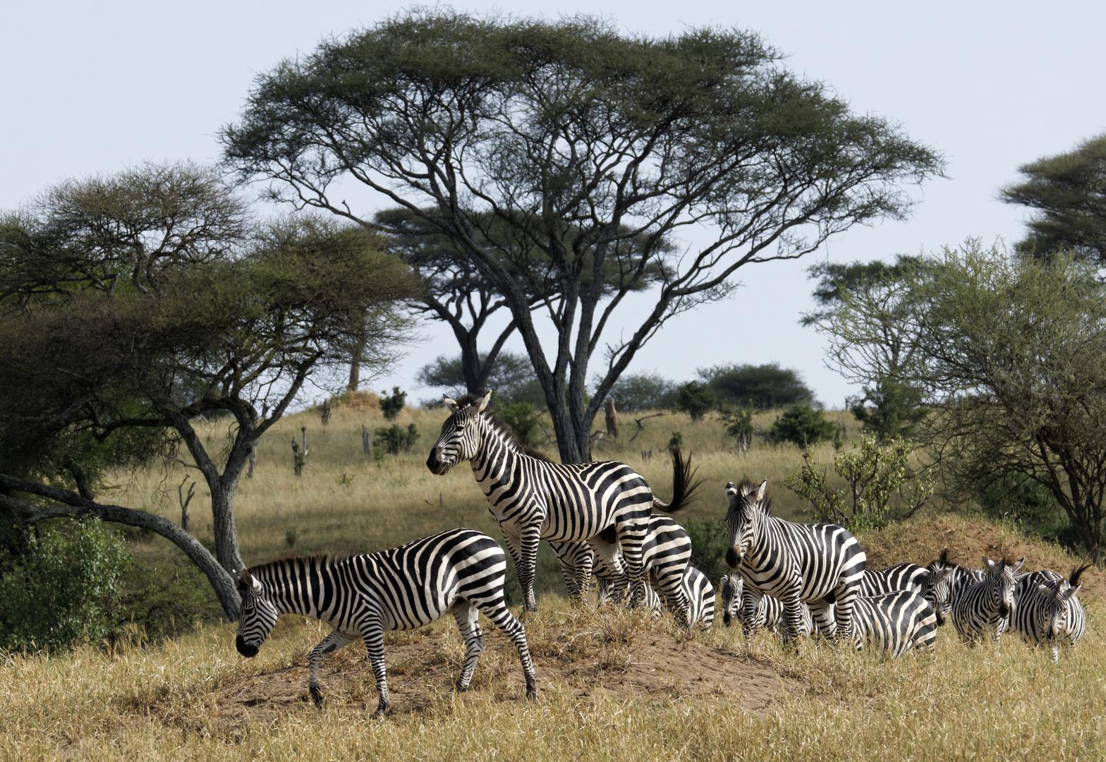 Im Tarangire Nationalpark, Tansania.