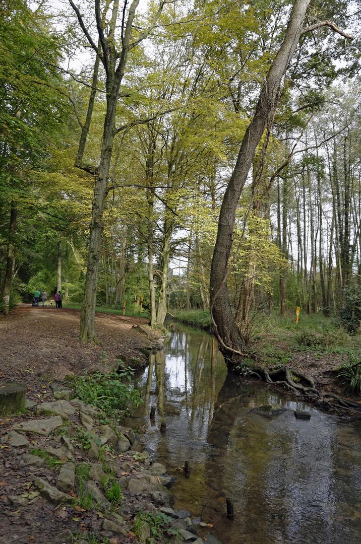 Im Thielenbrucher Wald