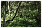 Im tiefen Wald ...