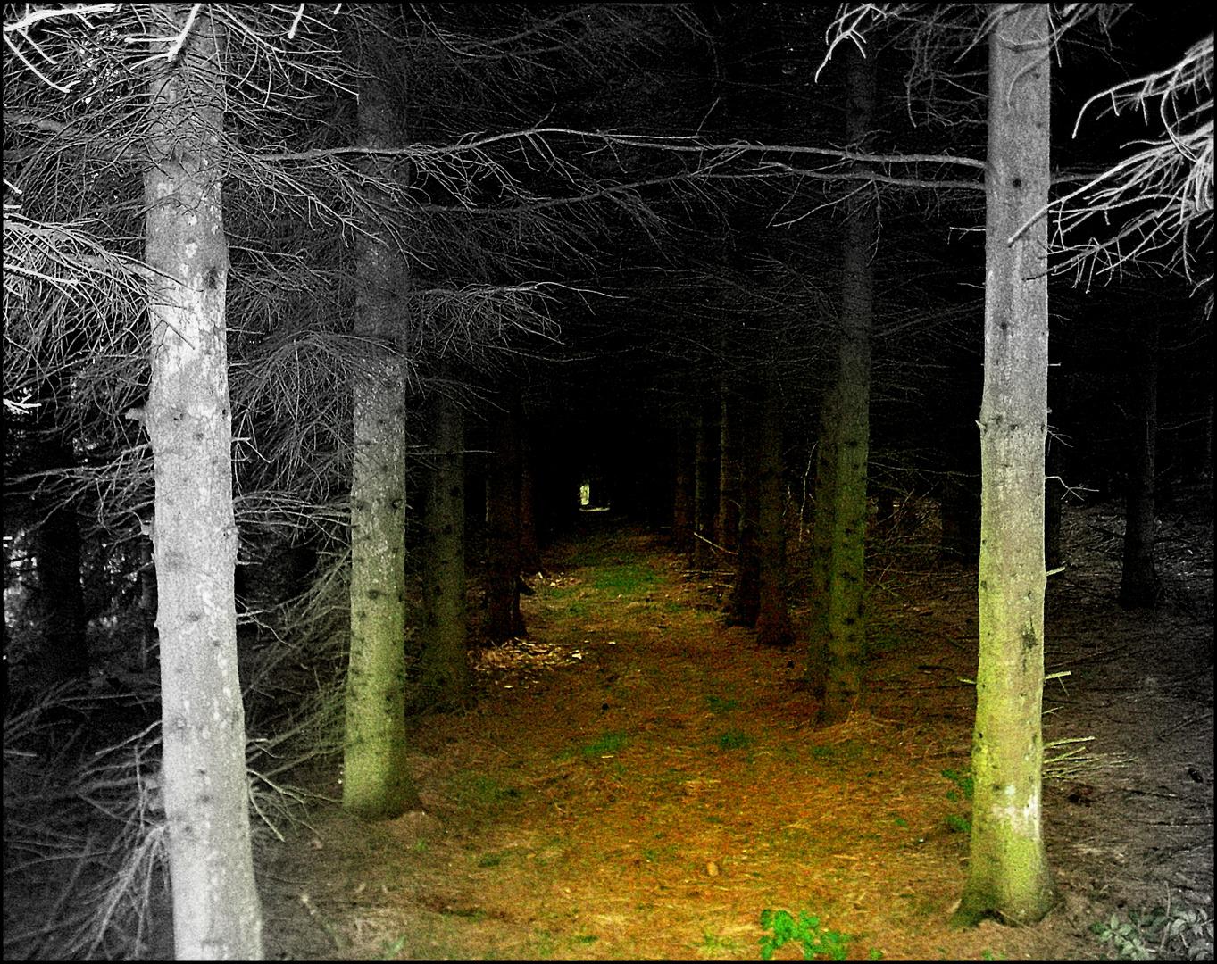 Im tiefen Wald